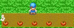 Harvest Moon Online